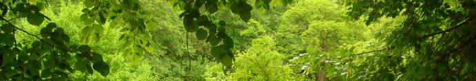 carre-jardin-cabanon.jpg