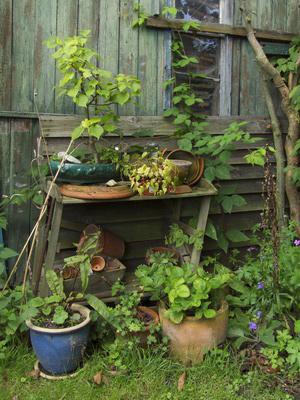 plante-cabane.jpg