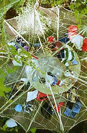 nid-arbre_000.jpg