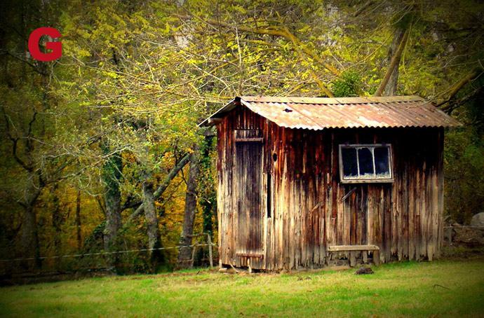 cabane-foret-de-sivens.jpg