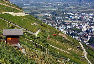 mazot-suisse-vigne.jpg