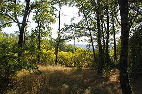 cabane-vente-terrain2.jpg