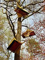 tente_arbres_2.jpg
