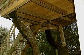 cabane_arbres.jpg