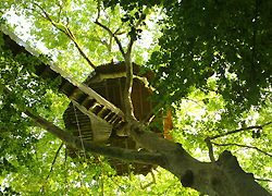 cabane-arbre-location-canon.jpg