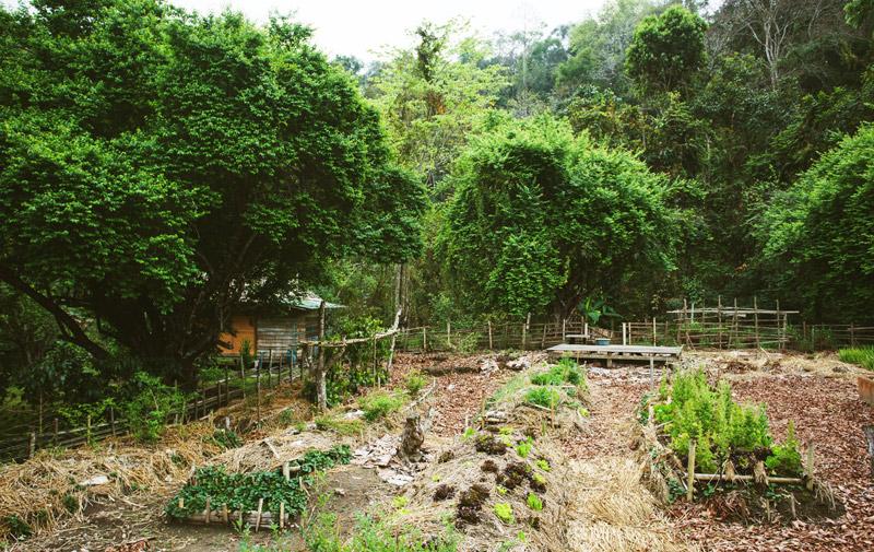 cabane près d'une zone de permaculture