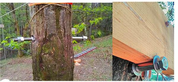 fixation perçage arbre cabane perchée